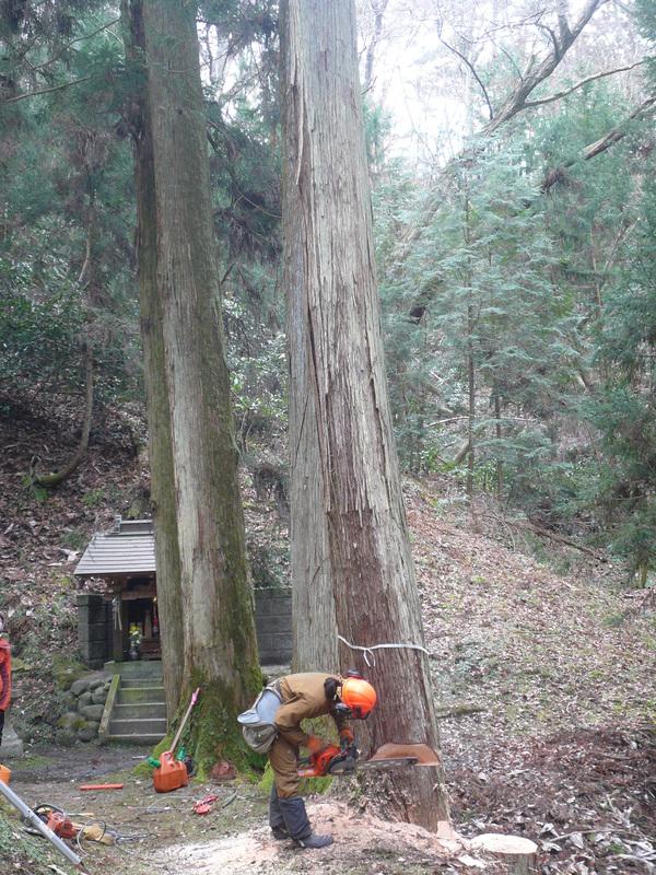 御神木の伐採