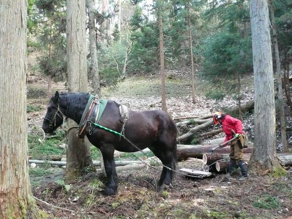馬搬での伐採木の搬出